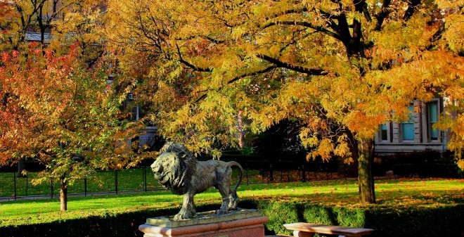 A Lion In Autumn